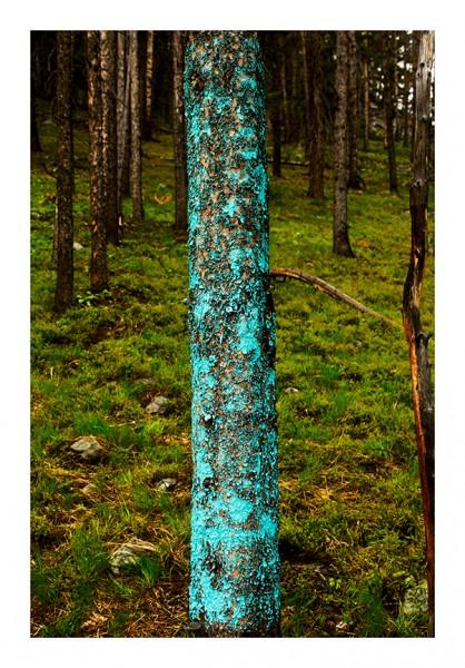 Tree Lines, 2013